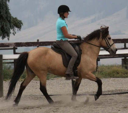 Icelandic horse, riding lessons, connected riding
