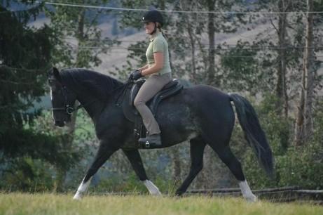 Pferde kaufen, Pferde verkaufen, News, Termine, Links, Vereine ...
